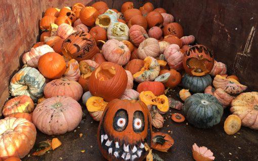Composting Pumpkins